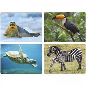 Cartes photos - les Animaux